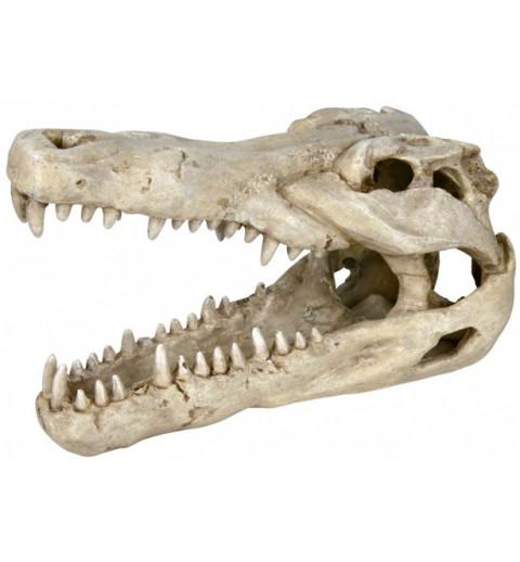 Crâne de crocodile