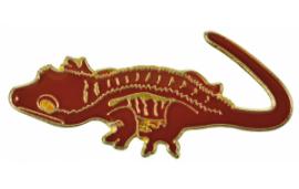 Pin's correlophus ciliatus