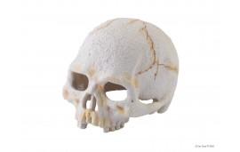 Cachette Tête de Mort - Primate Skull