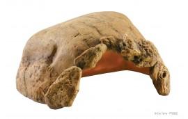 Caverne - cachette - tortues terrestres et autre