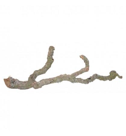 Branches de liège