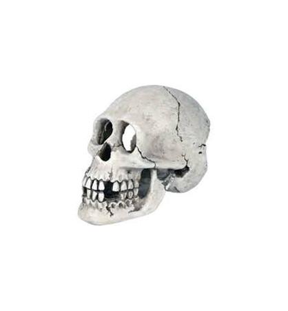 Décoration Crâne