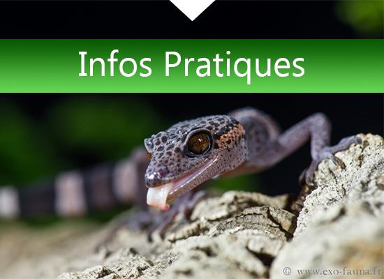 Informations pratiques de reptilyon